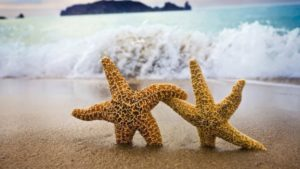 dancing-starfish-desktop-background